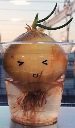 Characters Grass Potted Plant Expression Onion