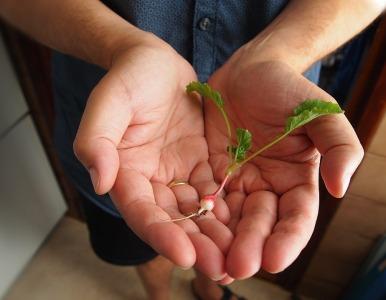 Hands Gardening Gift Radish Fingers Man