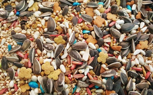 Seeds Bird Seed Mixed Sunflower Seeds Variety Feed