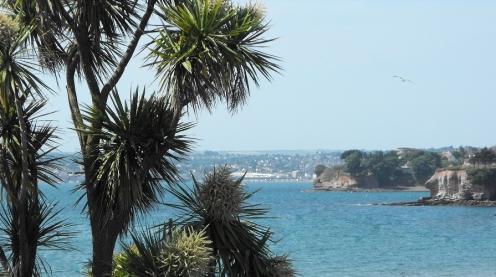 Torbay palms